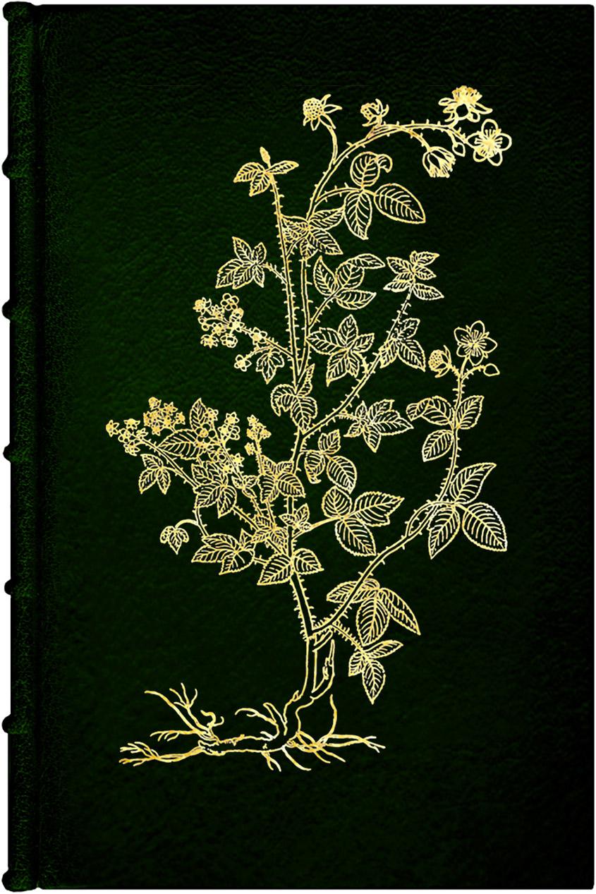 Under the Bramble Arch fine edition 1267